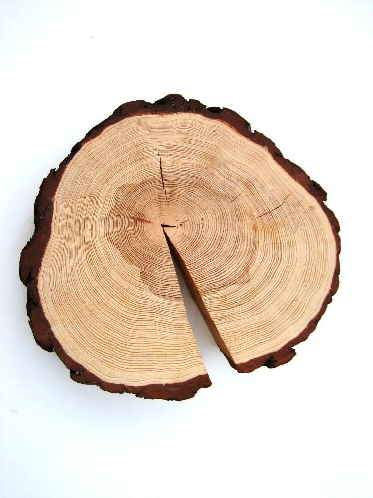Holz und seine Eigenschaften – Quellen, Schwinden und Werfen